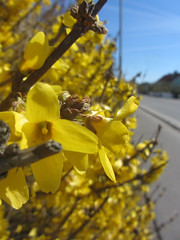 fotö (helena.e) Tags: helenae fotö påsk husbil rv motorhome älsa flower blomma macro bohuslän