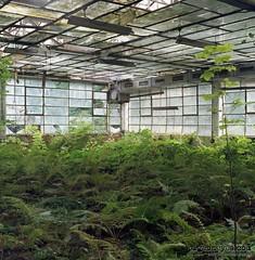 Greenland (Pigeoneyes.com) Tags: abandoned abbandono abbandonata abbandonato abandonedplaces factory fabbrica industrial industria industry involuzioneindustriale pigeoneyes lostitaly edificiabbandonati film kodakektar kodak ektar