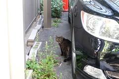 Today's Cat@2019-05-22 (masatsu) Tags: cat thebiggestgroupwithonlycats catspotting sony rx100m3 osaka