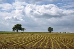 Les Sillons (Excalibur67) Tags: nikon d750 sigma globalvision art 24105f4dgoshsma paysage landscape campagne champs ciel cloud sky nature nuages arbres trees