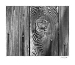 Declining (agianelo) Tags: wood grain fence plank screw head philips shadow texture monochrome bw bn blackandwhite