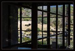 3ème jour / 3rd day - Maison du thé / Tea house -  Jardin d'Isuien / Isuien garden - Nara (christian_lemale) Tags: jardin garden isuien nara japon japan nikon d7100 奈良 日本