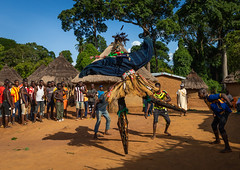 The tall mask dance with stilts called Kwuya Gblen-Gbe in the Dan tribe during a ceremony, Bafing, Gboni, Ivory Coast (Eric Lafforgue) Tags: adults africa africanethnicity animism animist bafing ceremony colourimage côtedivoire cult cultures custom dan dance dancers dancing day ethnic ethnology folklore gboni groupofpeople horizontal indigenousculture ivorycoast ivory8364 kwuyagblengbe mask masked men menonly outdoors performance performing raffiafibers rite secret society stilts tallmask traditionalclothing travel tribal tribe westafrica yacouba yacuba