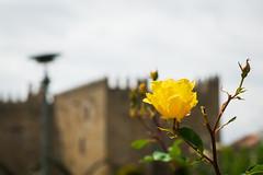 Jardim de Santa Bárbara (carlos_seo) Tags: braga portugal