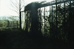 (no49_pierre) Tags: tessar film 35mm expired greenhouse once