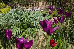 Reading in the Garden (SReed99342) Tags: london uk england garden man reading rookerygardens
