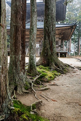 Danjo Garan trees (anhexplorer) Tags: japan pagoda temple koyasan trees nature old travel nosun wood wooden scenic historic unesco travelling mist wakayama religious buddhism building danjogaran
