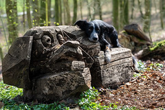 The Tinderbox - a fairy tale (The Papa'razzi of dogs) Tags: animal outdoor dog nature story tinderbox hcandersen wood figure fairytale