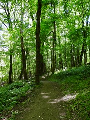 05/18/19 - wissahickon valley park (pepitaphotos) Tags: nature outdoors hiking path forest woods