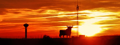 El sol de Castilla (Miradortigre) Tags: sunset sol toro castilla españa spain color antenas antens bull taurino