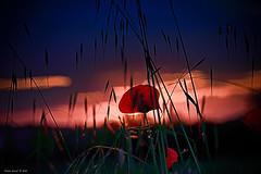 Rosso di sera - Red in the evening (alfapegaso) Tags: