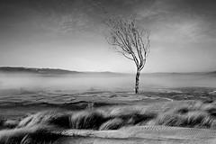 Meditazione (Zz manipulation) Tags: art ambrosioni zzmanipulation campagna solo nebbia albero solitario passeggiata