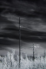 Mast of Death (Alice Deе) Tags: infrared ir monochrome trees trip sky black tree burnt experimental experience life dead lightning fantastic nature