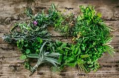 Fresh herbs (spices) (Inka56) Tags: thyme tarragon sage rosemary parsley mint dill coriander celery freshherbs freshspices estragon 7dwf flora