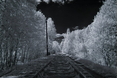 Stars above the railway (Alice Deе) Tags: infrared ir railway white star grass way trees forest pillar sky trip experience experimental spring sun far creative monochrome 950nm explore inexplore