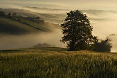Un nuovo giorno (Zz manipulation) Tags: art ambrosioni alberi autunno people old paesaggio zzmanipulation