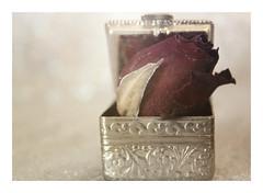 "Macro Mondays : Trinkets / Tiny Box (3 cm / 1,18"") (Tostaky2) Tags: macromondays trinkets rose box boite cadeau gift rosebud"