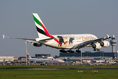 """A6-EER - Emirates - Airbus A380-861 - """"United for Wildlife"""" special colours (5B-DUS) Tags: a6eer emirates airbus a380861 unitedforwildlife special colours a388 ams eham amsterdam schiphol airport aircraft airplane aviation flughafen flugzeug planespotting plane spotting netherlands"""