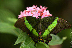 850_1615.jpg (Snapping Beauty) Tags: publicpark natural virginia butterfly nature day abstract naturewildlife insects beautyinnature horizontal places nopeople colors green esp