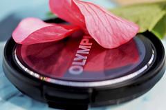 Macro Mondays...Photography Gear (Sue Armsby) Tags: macromondays photographygear lens lenscover black petals leaf pink green olympus macro armsbysue