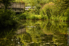 850_1551.jpg (Snapping Beauty) Tags: publicpark natural landscape virginia tranquility nature day abstract naturewildlife stills beautyinnature horizontal places nopeople bridge scenery things colors rustic green esp