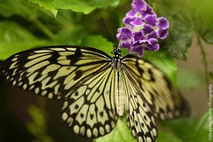 850_1610.jpg (Snapping Beauty) Tags: publicpark natural virginia butterfly nature day abstract naturewildlife insects beautyinnature horizontal places nopeople esp