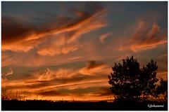 #SUNSET (Jehanmi) Tags: trees arbre paysage crépuscule orage landscape naturepaysage naturephotography dreamscape skyscape d7200 nikond7200 nikon soleil sun skyglory glory nuage ciel sky orange nature coucherdesoleil thebeautyofnature sunset
