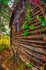 Autumn All Year Round (Alice Deе) Tags: one hundred years solitude house building sunlight day abandoned fall void