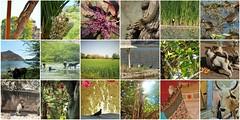 bundinature3 (belight7) Tags: bundi nature mosaic travel india squirrel birds rajasthan