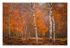 Lawrence Field - November 15th (Edd Allen) Tags: thepeakdistrict peakdistrict autumn landscape trees treescape light nikond810 nikon d810 nikkor70200mm clouds country countryside serene bucolic atmosphere atmospheric moody ethereal grindleford lawrencefield