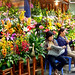 Hanoi florists