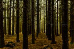 Langeskov, Brørup