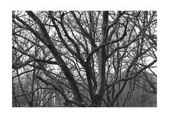 The Tree (PriscillaHernandez85) Tags: nature plant flora flore automne autumn france canon eos550d 70200 tamron noiretblanc blackandwhite monochrome arbre