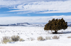 The west in winter (Ronda Hamm) Tags: 1585mm canon7dii landscape utah canon clouds mountains outdoors sky snow tree winter
