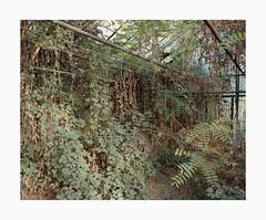 Cologne, 2018 (Darius Urbanek) Tags: 120 65mm 6x7 kodak mamiya7 portra400 abandoned analog color decay film glasshouse mediumformat