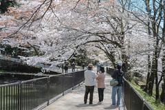 K4092169 (ODHuang) Tags: kyoto 京都 japan 日本 山科 山科疏水