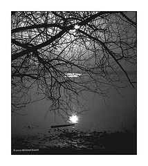 Sonne am Ammersee (Konicafan) Tags: konicaautoreflextc ammersee sonne baum tree ilford fp4 bw sw blackandwhite analog backlight gegenlicht bayern
