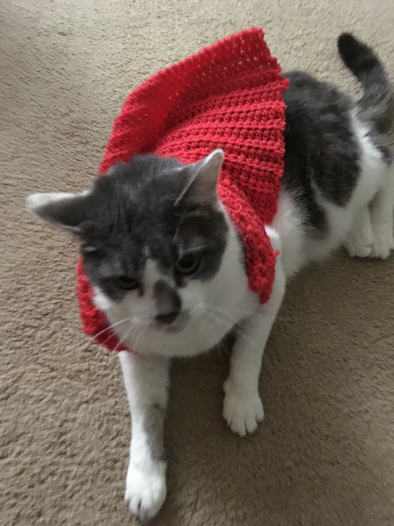 The World\u0027s Best Photos of cats and sweaters , Flickr Hive Mind