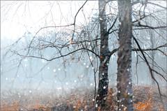 Rainy morning (Eva Haertel) Tags: eva haertel canon5dmarkiii natur nature landscape landschaft woodland forest wald season jahreszeit herbst trees bäume branches zweige baumstamm trunk unschärfe blurr regen rain nebel fog mist foggy komplementär detail complementary mood stimmung nostalgisch nostalgic sad tropfen drops holland niederlande netherlands winter
