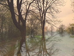 Dazwischen ist mal Kirschblüte (Casey Hugelfink) Tags: munich münchen neuperlach kirschblüte cherryblossoms sakura hidden versteckt graukalt grau grey junkwetter uglyweather park freizeitanlage trees bäume kirschbäume cherrytrees kalt cold spring frühling walk outdoor