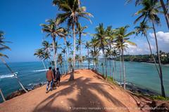 IMG_7276.jpg (Dhammika Heenpella / CWSSIP Images of Sri Lanka) Tags: dhammikaheenpella මිරිස්ස clusterofcoconuttreesbythesea ශ්රීලංකාවේචායාරූප ධම්මිකහීන්පැල්ල coconuttreehill ශ්රීලංකාවේෆොටෝ imagesofsrilanka srilanka mirissa කොකනට්ට්රීහිල් ශ්රීලංකාව traveldestination placesofinterest