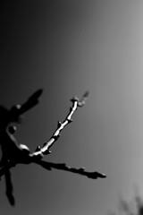 Monochrome... (frèd Liard...) Tags: monochrome bw nb blackandwhite noirblanc nature arbre fredliard