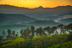 Sunrise at Cukul Tea Plantation (tehhanlin) Tags: bandung indonesia pangalengan situciluenca situgunung sukabumi teaplantation sunrise sonysingapore landscape ngc cukul a7rm2 fe1224g sony