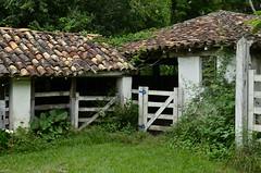 O mato crescendo... (Márcia Valle) Tags: oldfarm fazendamineira velhafazenda minasgerais interiordeminas interior countryscene cenarural brasil brazil márciavalle photographer antigo histórico nikon