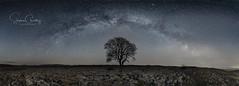 The Lone Tree and the Milky Way (Starman_1969) Tags: astro cygnus field lone malham milky pano rocks selfie space tree way yorkshire astrophotography benro astronomy