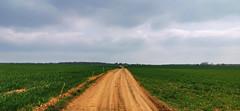 Au milieu des champs de la Vallée de la Mance (Πichael C.) Tags: 140419 randonnée châtel st germain et plateau de rozérieulles rando balade promenade nature metz 57 moselle hike