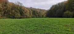 Une très belle clairière dans la Vallée de la Mance (Πichael C.) Tags: 140419 randonnée châtel st germain et plateau de rozérieulles rando balade promenade nature metz 57 moselle hike