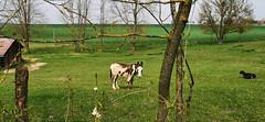 Les animaux de la Ferme Saint Hubert ^^ (Πichael C.) Tags: 140419 randonnée châtel st germain et plateau de rozérieulles rando balade promenade nature metz 57 moselle hike