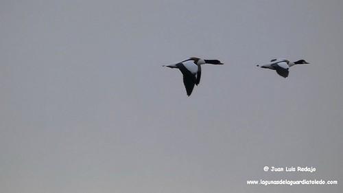 tarros-blancos-vuelo-1 254