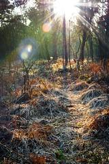 Der Morgen im Venner Moor (derüsch) Tags: 2019 moor venne venner senden 48308 morgen canon eos 760d 35mm efs35mm f28 macro is stm flare lens wald forest outdoor